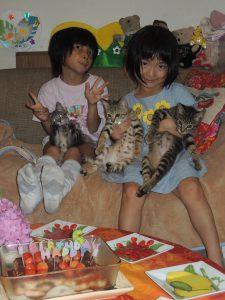 アラフォーママの子育て日記・赤ちゃん猫がやって来た!の話➃再び3兄弟揃う