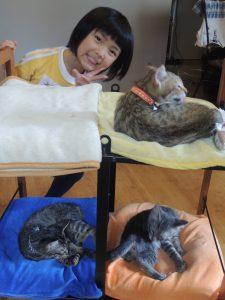 アラフォーママの『子猫』育て日記・7匹めの猫育て!