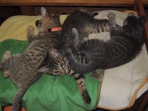 アラフォーママの『子猫』育て日記・子猫の名前決定!
