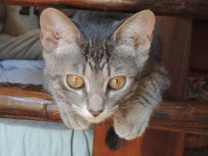 アラフォーママの『子猫』育て日記・モリグレコのお話