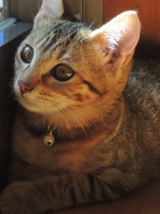 アラフォーママの『子猫』育て日記・ミミの話