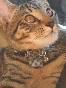 アラフォーママの『子猫』育て日記・黒熊大納言のお話